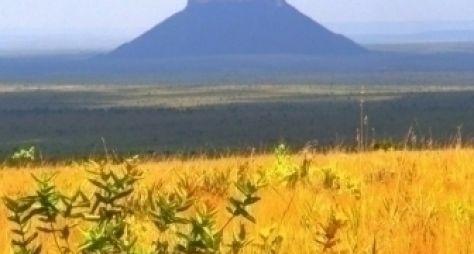 Novela de Walcyr Carrasco pode ser gravada no Tocantins