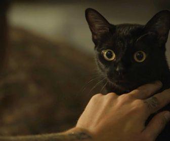 """Gato Léon de O Sétimo Guardião será citado em """"O Tempo Não Para"""""""
