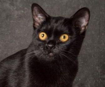 O Sétimo Guardião: Público aprova gato Léon e aponta vilã inconsistente