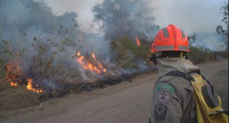 """""""Jornal da Band"""" apresenta série sobre incêndios no Pantanal"""