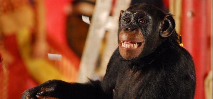 O macaco Xico, grande destaque de Caras & Bocas