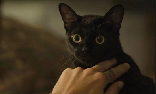O Gato Léon de O Sétimo Guardião. Foto: TV Globo