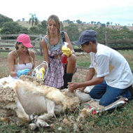 Simple Life - Mudando de Vida: Karina e Ticiane aprontam com vacas e ovelhas